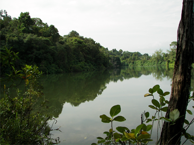 Upper Peirce Reservoir (Singapore)